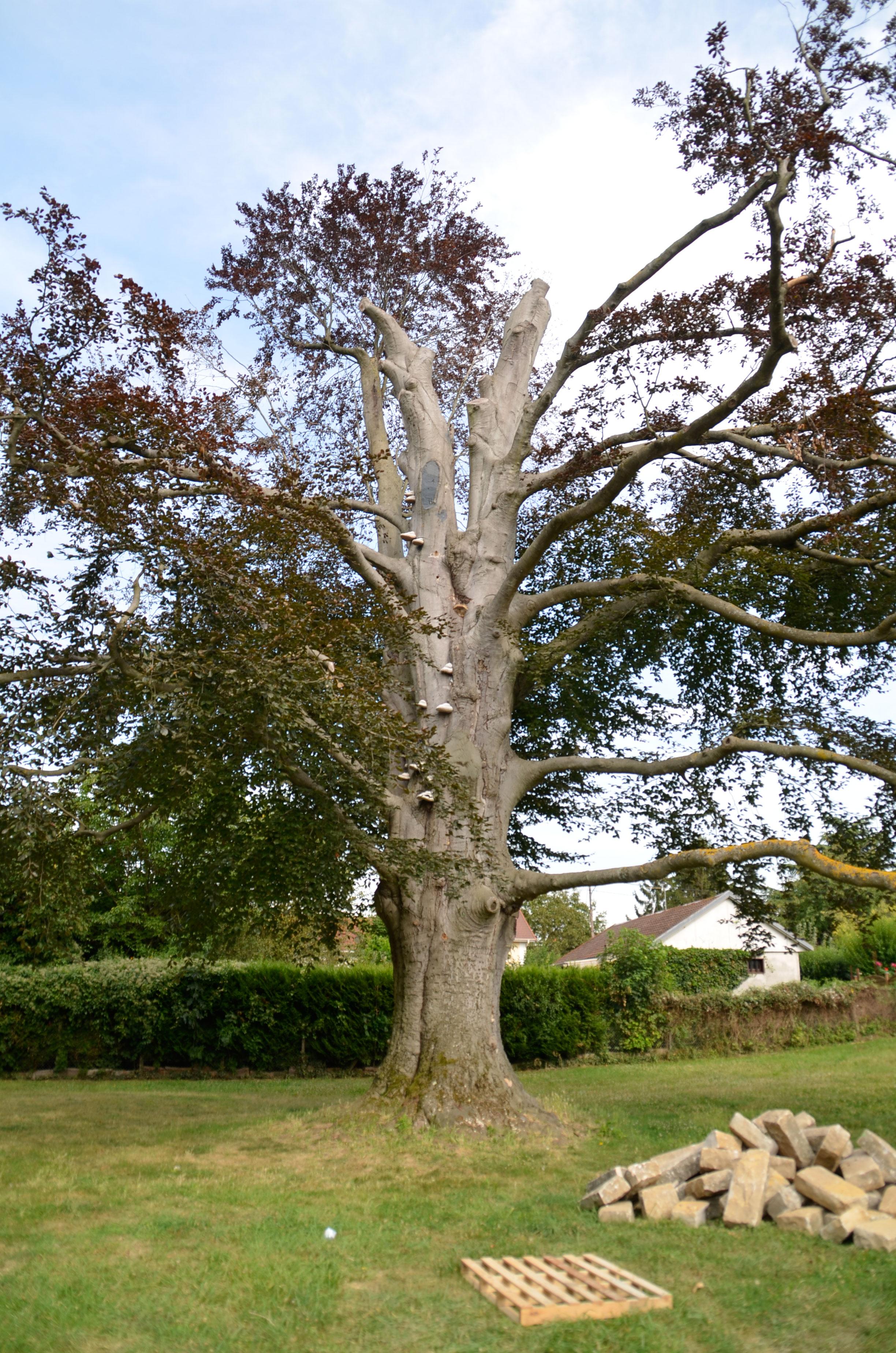 etat d'urgence pour nos vieux arbres | ville de villecresnes