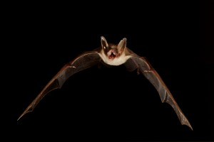 animaux-nocturnes