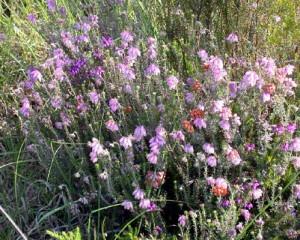 fleur-marais